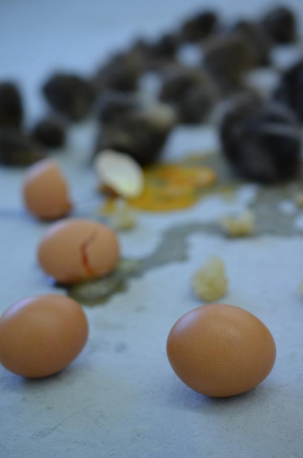 Kunstakademie Düsseldorf - Kunstwerk mit Filz und Eiern