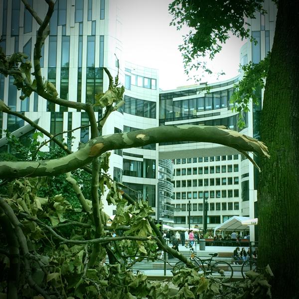 Düsseldorfer Hofgarten nach dem Sturm