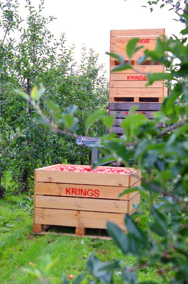 Apfelkisten beim Obstbauern Alexander Krings in Rheinbach